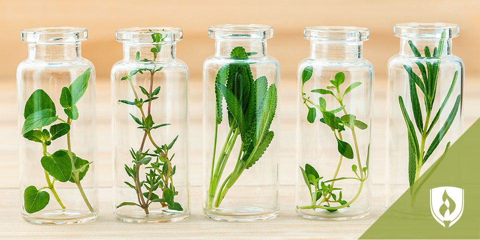 jars with herbs